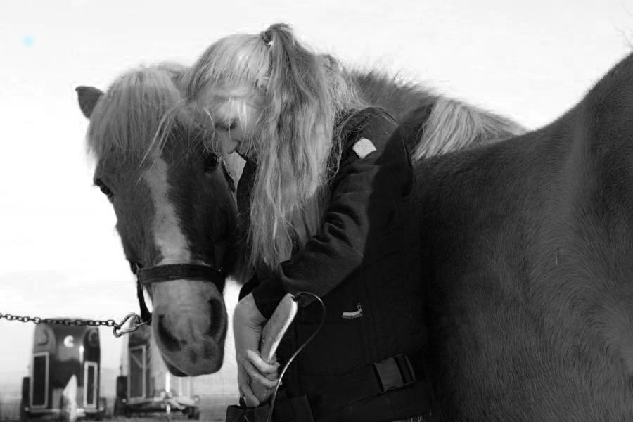 Die Pferdefachtherapeutin bei der Arbeit